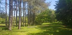 #Pembrey #countrypark #llanelli #burryport #green #grass #trees #sky #blue (Rich J Photo) Tags: sky llanelli green blue pembrey grass countrypark trees burryport