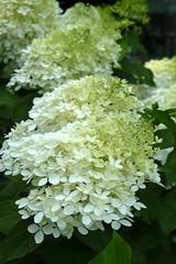 PLD 168 (newnumenor) Tags: paris france ladefense flowers