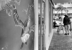 Turning Turtle (macromary) Tags: mural turtle streetart leicaflexsl leica leitz leicaflex slr primelens vintage camera manual film bw blackandwhite florida nature macro 60mm elmarit monotone palmbeachcounty fomapan fomafilm fomapan100 60mmelmarit macrolens lantana painted street wall man dog molly