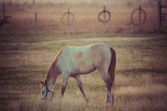 caballo al amanecer2 (Sergio_Pérez) Tags: canoneosrebelt6 ef75300mm eosrebelt6 1300d amanecer caballo