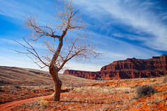 Lonely Tree On A Road To Canyonlands National Park, Utah (Color) (thedot_ru) Tags: grass mountain trip tourism tourist adventure travel travelling travels usa unitedstates us america tree lonely dry sky clouds skyporn mountains formations color nature landscape utah canyonlandsnationalpark nationalpark park canyon mood orange canon5d 2015
