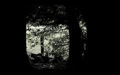 Through the Window 1b (ShinyPhotoScotland) Tags: art photography equipment camera lens nature places scotland perthshire rawconversion manipulated composite hdr enfuse digikam flora toned colour trees rawtherapee serifaffinityphoto strathearn crieff birch ladymaryswalk fadeddesaturated cold greenish beech fuji fujixt20 fuji18135mm silhouette window frame black dark lowkey