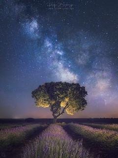 lavenders & Stars