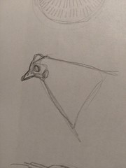 Drawing practice: chicken and hens (# annola) Tags: drawing dessin disegno sketch practice chicken gallina poule