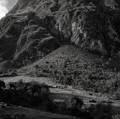 Along the Inca Trail, Peru (austin granger) Tags: peru inca incatrail llamas mountains trek square film canyon gf670
