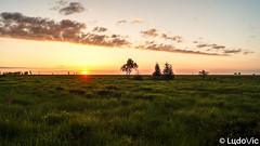ce n'est pas la fin (Lцdо\/іс) Tags: sun soleil sunset fagnes forêt travel trip treking trekking voyage venn venen belgique belgium ardennen ardennes lцdоіс plateau fagnard nature naturelle réserve
