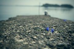 Lost Dreams (check4newton) Tags: water blue fjord profoto flash dreams silk nightmare ef 2470mm meer wasser himmel porträt