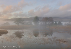 In The Presence Of Light (jeanette_lea) Tags: kelly hall tarn the lake district cumbria torver coniston united kingdom sunset lowlight mist trees grass water reflections clouds sky fells
