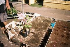 Columbia Road (cranjam) Tags: ricoh gr1 gr1v film kodak portra160 uk england london londra hackney columbiaroad columbiaroadflowermarket stall fiore flower