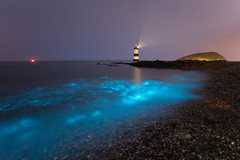 Bioluminescence - July 13th 2018' (Kristofer Williams) Tags: bioluminescence bioluminescent plankton lighthouse sea water beach seascape night nightscape penmon anglesey pebbles wales northwales