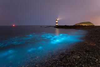 Bioluminescence - July 13th 2018'