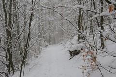 On ne s'en lasse pas (ViveLaMontagne67) Tags: france vosges grandfaudé brouillard hiver branches feuilles leaves trees forest path winter snow fog white blanc