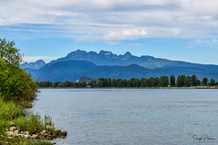 Pitt River/ Golden Ears Mountains (SonjaPetersonPh♡tography) Tags: portcoquitlam pittriver river nikon nikond5300 bc britishcolumbia canada landscape pittmeadows pittpoulder water riverbank riverfront traboulaypocotrail landscapes viewpoint view mountains