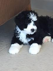 Baby Reggie