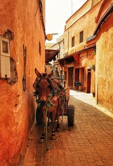 Donkeys are the anonymous heroes of the médina ❤️ (siasia.k) Tags: medina marrakech morocco donkey maghreb labour work load animal heroes