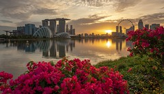 Sunset at Marina East, Singapore (reinaroundtheglobe) Tags: singapore asia marinabay marinabaysands flowers reflections water waterreflections waterfront sunset nopeople city cityscape skyline architecture modernarchitecture buildings