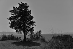 HIGH NOON (LitterART) Tags: nikon d800 meer mare sea baum tree monochrome nikonfx