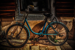 Blue Bicycle #2 (Leaning Ladder) Tags: shkoder albania bicycle blue light shadows colors canon 7dmkii leaningladder