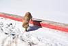 Feeding a Stray Dog, Atlas Mountains, Morocco (meg21210) Tags: stray feeding feedingastray morocco roadside atlasmountains feedingastraydog