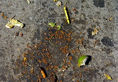 An Encounter With Some Stuff in the Parking Lot in Front of Jose Peppers Mexican Restaurant (ricko) Tags: parkinglot junk foodscraps rice crayon limewedge cigarettebutt asphalt pavement