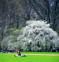 Enjoying Spring in Central Park (Stanley Zimny (Thank You for 32 Million views)) Tags: tree white landscape ny nyc centralpark people girl love