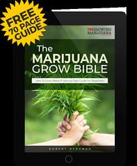 IWVhKuF44ZQ9xHOD7fpy2ZmHhwC5nusglw5p95lUx7Ii13pfoCyvxYeKbRgzPJWMn7yQElSW43mVilhHo8iCt_k=w1024 (Watcher1999) Tags: free marijuana grow bible cannabis california seeds medical learn how growing weed smoking ganja reggae legalize it