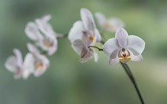 Orchid (V Photography and Art) Tags: orchid flower dof fujixt2