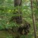 Dowle's Brook, Wyre Forest (DankSpangle) Tags: sony55mmf18 sonya7r2