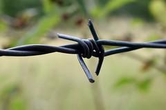 details (carmenpartington) Tags: detail barbedwire focus walk cumbria rydal ambleside lakedistrict