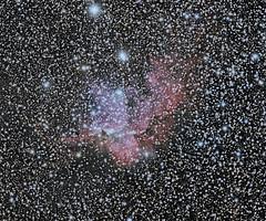 NGC 7380 (Wizard Nebula) in Cepheus (astrothad) Tags: stars cosmos astronomy astrophoto space nebula wizardnebula emissionnebula ionizedhydrogen starcluster cepheus milkyway
