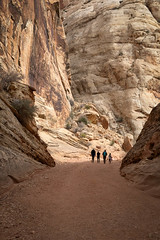 Walking into the Sunlight (Kirk Lougheed) Tags: capitolreef capitolreefnationalpark coloradoplateau grandwash usa unitedstates utah canyon landscape nationalpark outdoor park silhouette wash