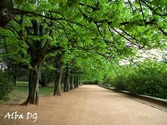 Paseo de Árboles en Jardín de Serralves, Oporto (Portugal) (albadgr) Tags: oporto porto portugal jardín garden serralves nature naturaleza walk paseo árboles trees