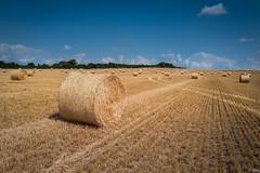 Prairie Hay Bales (Hector Patrick) Tags: dng flickrelite leicaq lightroom614 northyorkshire yorkshire wrelton sunlight leica rural farming camera lines