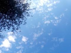 Facing the sky (A blond-Tess) Tags: coloursinthesky bluesky clouds summerlight summer yoga 365project 365 dailychallenge dailyphotochallenge 365days