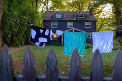 jD201807_0062 (chuckp) Tags: baltimore md rolandpark backyard fence laundry sun