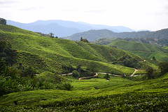 8H1_0028027 (kofatan (SS Tan) Tan Seow Shee) Tags: malaysia pahang cameronhighland bohplantation sungeipalas copthornehotel brinchang paritfalls bharatteaplantation robinsonfall kofatan
