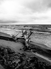 after life (Darek Drapala) Tags: bw blackwhite blackandwhite sea seashore seascape mood mystery mystic baltic lumix light landscape water waterscape panasonic poland polska panasonicg5 nature natural