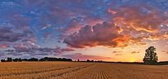 Sonnenuntergang (Terravisions) Tags: sunset clouds sky nature tree color sonnenschein abendsonne abendhimmel himmel feld landscape
