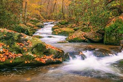 Mountain Stream in Fall (Catch the Moment Photography) Tags: landscapephotography landscapes greatsmokymountains mountainstream fall fallcolors wadehooperphotography water waterfalls forest fallfoliage rocks autumn autumnleaves leaves trees scenic