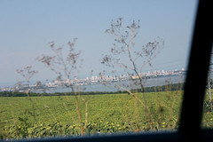 (mihxiii) Tags: sea sunflowers buildingd fromthecar window ïnmotion ontheroad summer