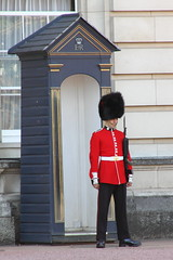 Coldstream Guard at Buckingham Palace (Ian Press Photography) Tags: london england british ceremony ceremonial army military guard guards guardsman guardsmen foot footguards infantry regiment regiments royal buckingham palace coldstream