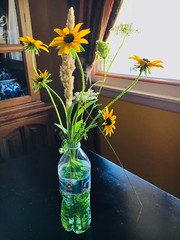 norland d. cruz photography: earth-friendly flower vase with wildflowers i picked from liberty park (shot on my dependable iPhone 6s) (norlandcruz74) Tags: green recycling recycle recycleable reusable nj new city jersey american filipino pinoy cruz d norland 6s iphone earthfriendly ecofriendly plastic bottle vase flower yellow coneflowers flora flowers wildflowers
