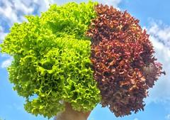 Veggie brain (max832) Tags: 6 blue green 2015 summer nuvole clouds colorful fun sky cielo iphone hdr bordeaux azzuro verde colorata salad