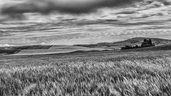 Bald Butte (D E Pabst Photography) Tags: wheat washington field baldbutte southeastwashington canola palouse pullman butte landscape monochrome whitmancounty blackandwhite agriculture farming clouds