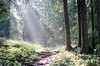 Light my path (Michi Key) Tags: baum forrest wald tree sunrays sonnenstrahlen pfad path
