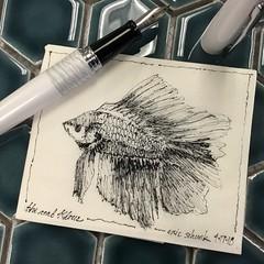 Beta fish - napkin (schunky_monkey) Tags: illustration art penandink ink pen fountainpen drawing draw sketching napkinsketch sketch napkin classpet water fishtank betafish fish