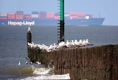 180408 mnoGNL 180417 © Théthi ( 7 shots ) (thethi: pls read my first comment, tks) Tags: mer oiseau pieu briselame mouette goéland navire transport container merdunord cadzand zeeland paysbas bestof2018 setwings setwater halloffame setvehicule faves101 fact90 setavril zelande