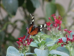 P4190141 (Steve Guess) Tags: horniman museum butterfly forest hill london england gb uk