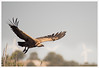 _LUN5134-1 (josemiguellunaromero) Tags: animales naturaleza