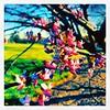 And then the sun. #collegepark #maryland #iPhone #commute #sidewalk #roadside #iPhonemacro #macro  #flower #flowersofinstagram (Kindle Girl) Tags: roadside collegepark maryland iphone commute sidewalk iphonemacro macro flower flowersofinstagram
